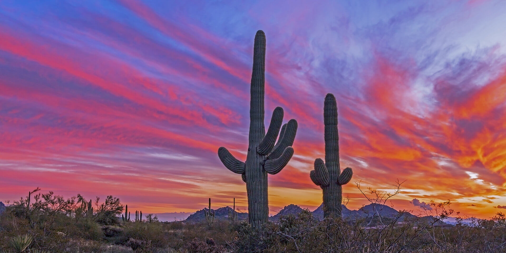 Super Vibrant  Arizona  Landscape Sunset With Cactus Near Phoenix & Scottsdale,. XMAS day ,2019